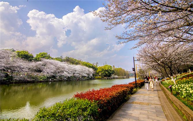 红图丨春光明媚的樱花湖