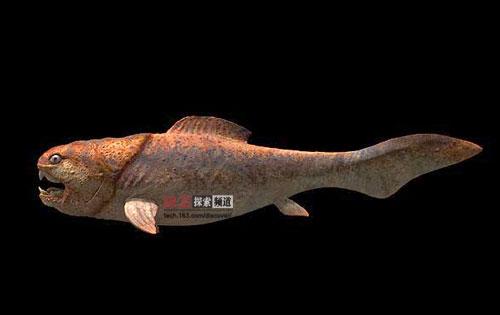 史前海洋最凶猛的巨兽没真正的牙齿却能吃鲨鱼