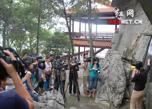 成风景/(在湖南娄底曾国藩故居,中新社的美女记者全神贯注地拍照。)