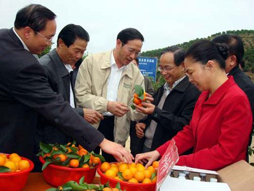 陈章良副主席在岑溪市万亩柑桔基地调研