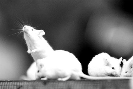 长沙市小动物保护