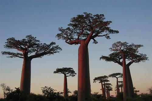 全球10大最壯觀的樹木 - 禅牌苑 - 禅牌苑