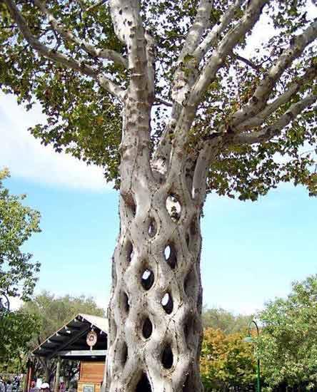 引用  全球10大最壯觀的樹木 - 王子殿下 - whxcg310 的博客