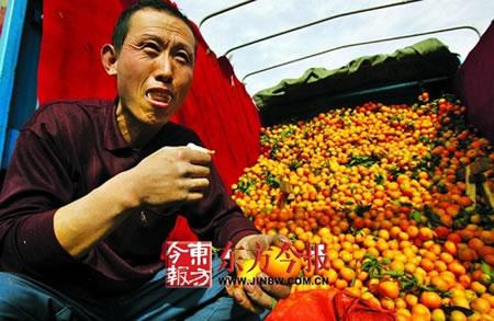 资料图:商户现场吃橘验证