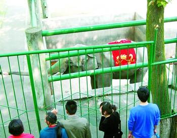 动物园为亚洲象18岁生日造世界最大动物生日蛋糕_湖南
