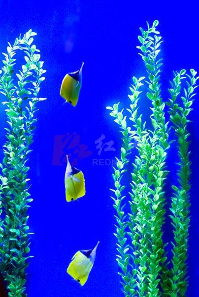 长沙世界之窗深海游物(图)