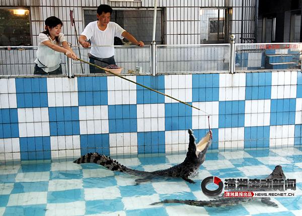 开心的,有趣的,新奇的,尴尬的……本报发起了征集动物园的老照片和小