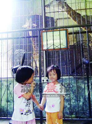 邓京京带着一对双胞胎姐妹,第一次到了这个有着54年历史的老动物园,这