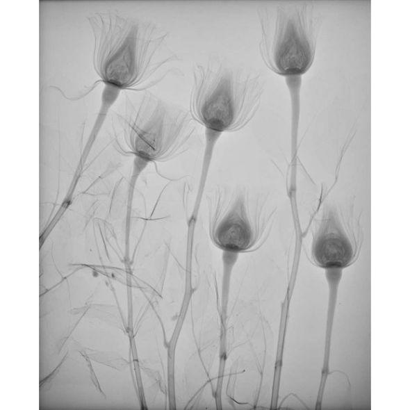 美丽而诡异的玫瑰   作品:美丽而诡异的玫瑰.摄影师:纳撒