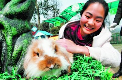 记者从长沙小动物保护协会了解到,宠物兔可爱但不好养,希望市民购买前