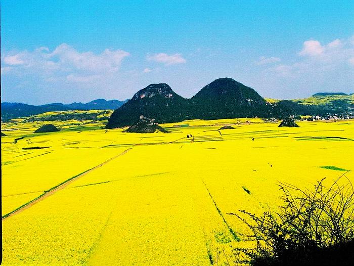 婺源/通常有油菜花的地方就能寻找到春天的影子。