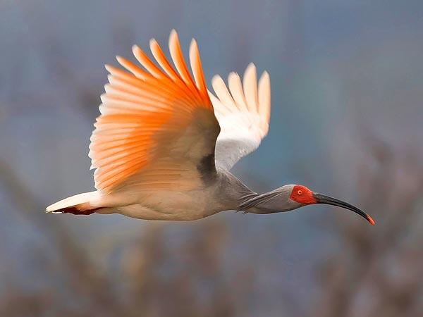 ...摄影师、1名野生动物画家、1名爱好鸟类的公共代表及1名图书...