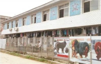 长沙河西艺术培训学校300家 规范的不到30家