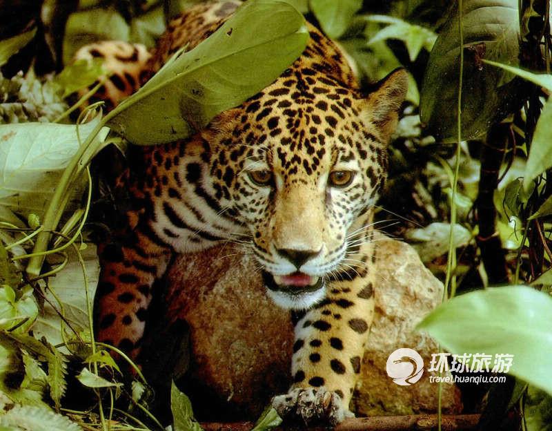 亲近自然 走进亚马逊热带雨林(组图)