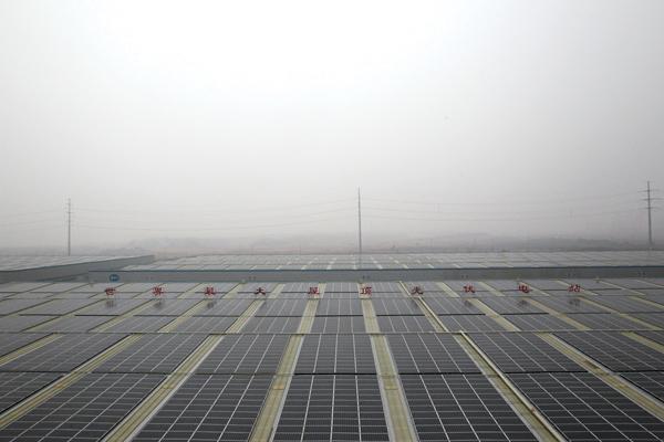 据公司负责人介绍,整个电站项目包括公司厂房屋顶和九华创新创业中心