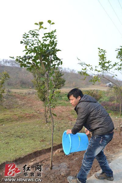 社会种植小树苗教案
