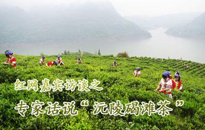 """红网嘉宾访谈之专家话说""""沅陵碣滩茶"""""""