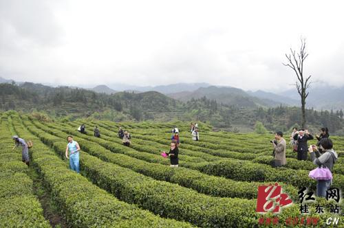 海马骑士桂东生态之旅活动在桂东县举行