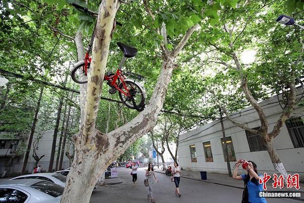 自行车上树成南京理工大学毕业风景图片