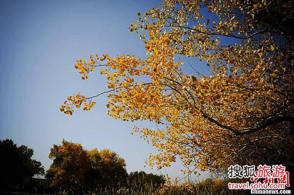 不到喀什不算到新疆 北方赏秋最美地