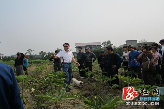 【献礼十八大】农民专业合作社遍地开花 致富之路宽阔通达
