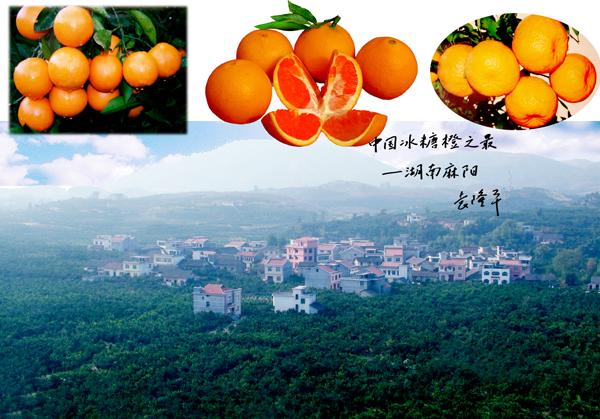 麻阳-中国冰糖橙之乡
