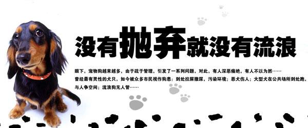 红网12月14日长沙报道 通讯员 陈志刚 张晓春   随着人们生活水平的提高,越来越多的人开始饲养宠物。但由于种种原因,相当数量的宠物遭到遗弃。而相关组织或部门收容能力有限,绝大部分流浪小动物依然没有容身之处,笔者就这一现象进行了调查。      12月13日,媒体发表了题为《探访流浪小动物收容基地的流浪汉生活》的报道,在一座用铁丝网围起来的小院里,铁篱笆圈着270多条流浪狗。被称为狗妈妈的收容所工作人员查阿姨不时重复着没有遗弃,就没有流浪!