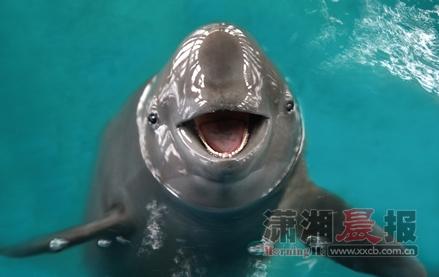 壁纸 动物 海洋动物 桌面 439_277