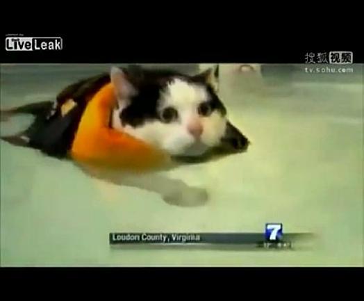 [视频]美国a视频小猫减肥游泳逗乐女主持死美女水图片