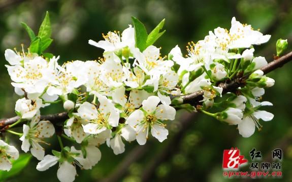 双牌县:万亩桃花盛开 处处春意融融(组图)