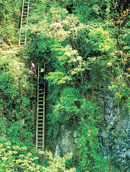 """张颐佳 实习生 杨沁沁 全超)一对兄妹求学行""""天梯""""之路的艰难,牵动了"""