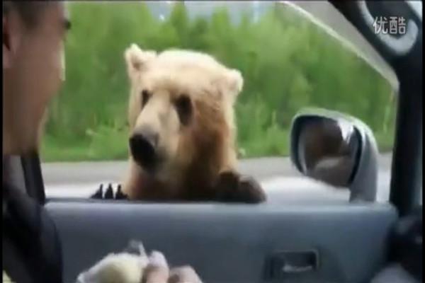[视频]现实版熊出没俄罗斯公路上的乞丐转移大开场漫画图片