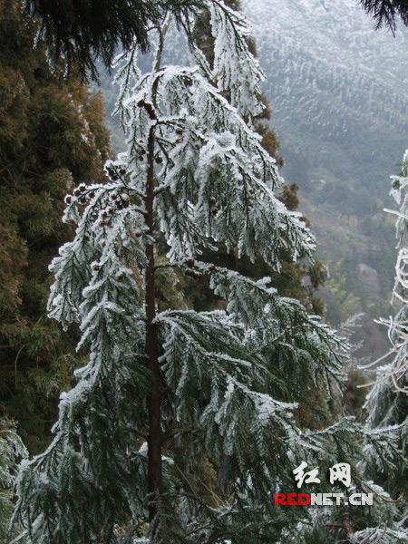 三九 寒天多吃御寒食物 张家界衡山正是赏冰玩雪好时节
