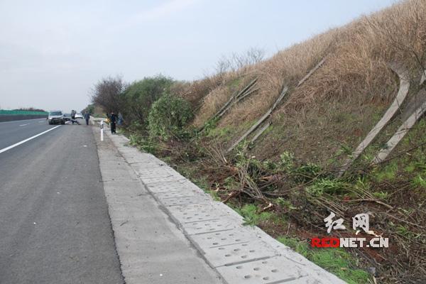 高速护坡的树木被碾毁