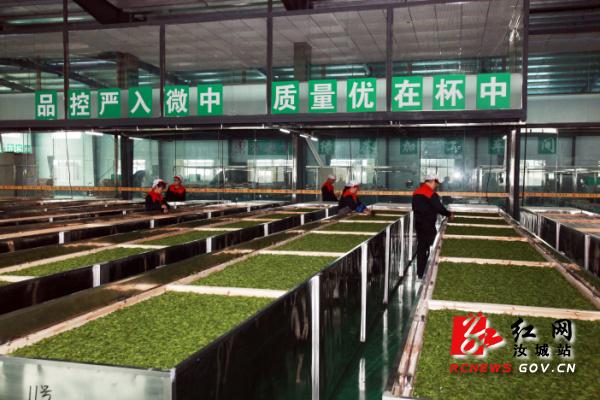 暖水松溪茶园茶叶生产车间