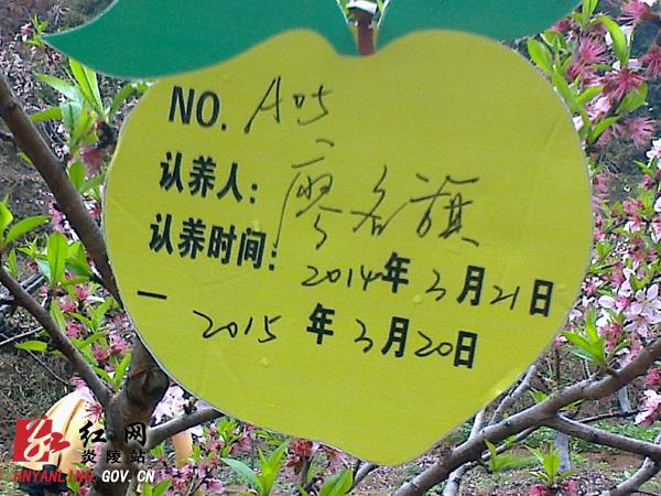 有关桃树的简笔画; 炎陵县开展桃树认养活动