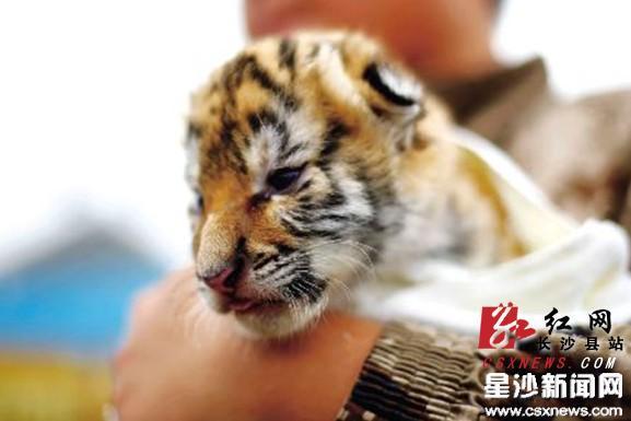 """长沙生态动物园启动""""小动物爱旅游""""活动"""