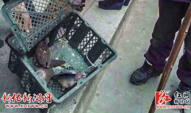 刑法保护野生动物