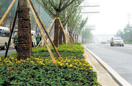长沙多条主干道成林荫大道 立交桥桥墩被绿植覆盖高清图片
