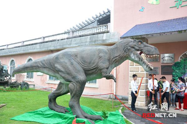 """齐齐""""现身""""湖南省森林植物园,向游客展示众多史前动物的""""王者风范""""."""