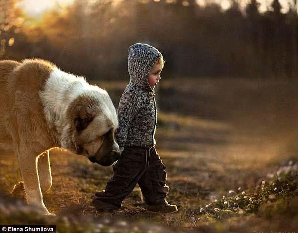 宝宝与大狗的故事 刻画人与动物的真挚感情