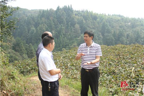 媒在我们乡里展了&o葡萄熟了&o型亲互动活动