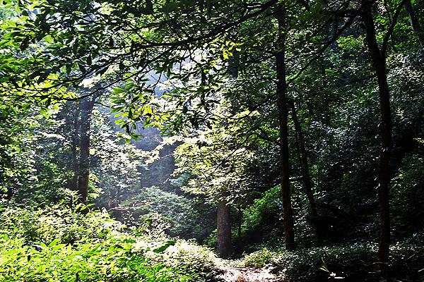 【发现美丽湖南】楠木林