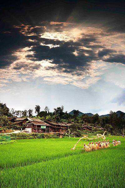 田间风景竖屏壁纸