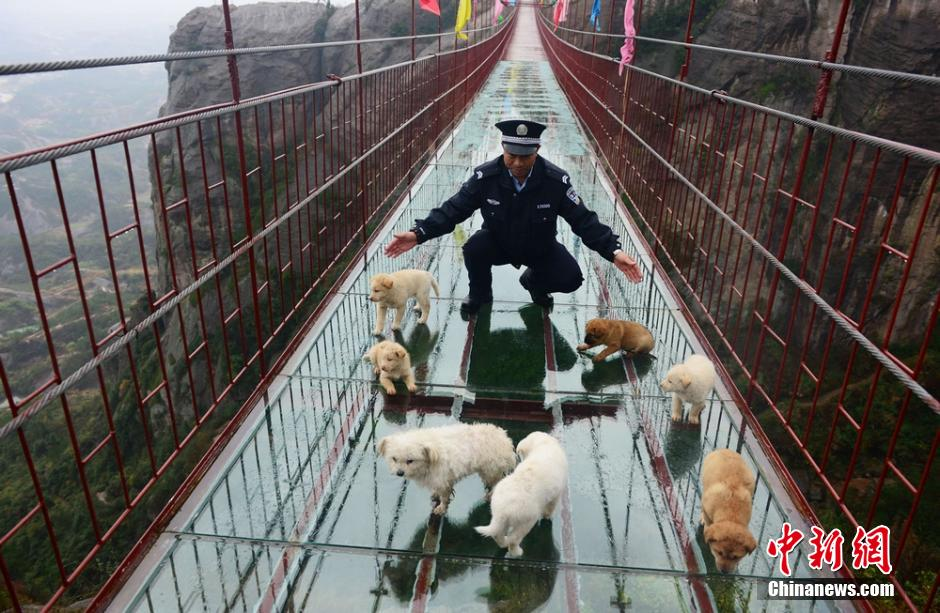 Security officer protects dogs from falling off the bridge