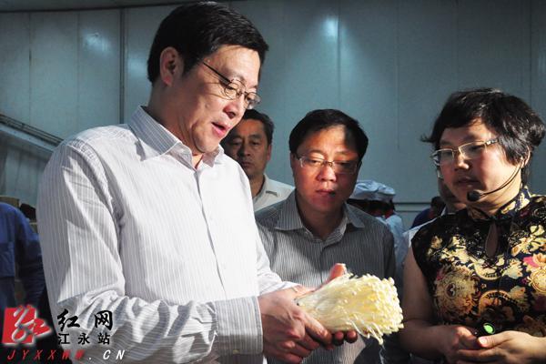 5月13日,杜家毫(左一)在江永了解金针菇生产情况。