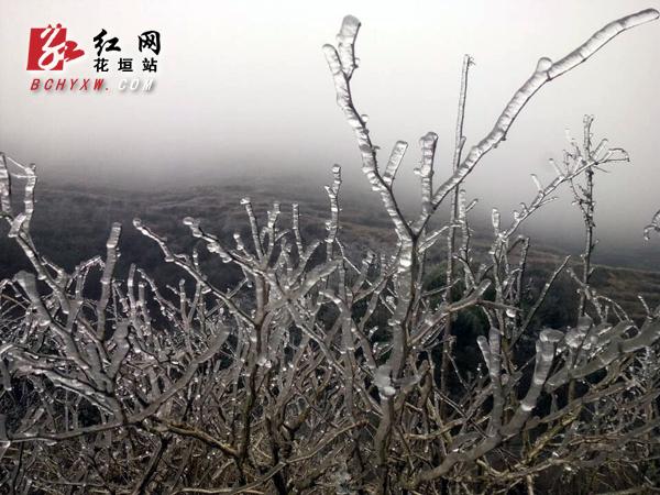 雨雪天气来袭 花垣800米以上高寒山区冰树银花
