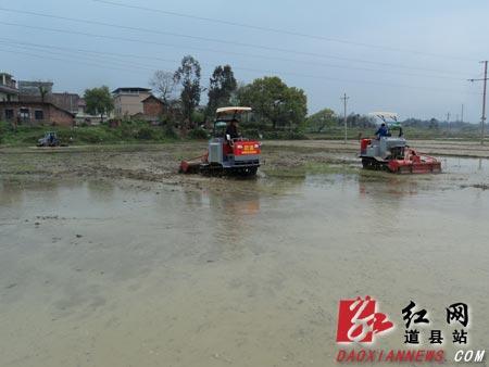 图为道县四马桥镇燕山村的田野里3台大型农机正在翻耕稻田,为插种早稻