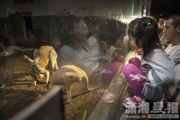 夜探长沙生态动物园 还有萤火虫做伴