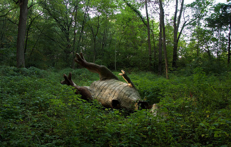现实版侏罗纪公园:人造恐龙潜伏幽暗森林(组图)图片